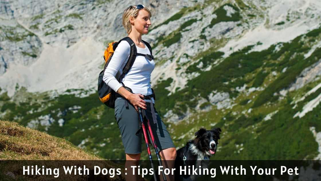 Hiking With Dogs : Tips For Hiking With Your Pet